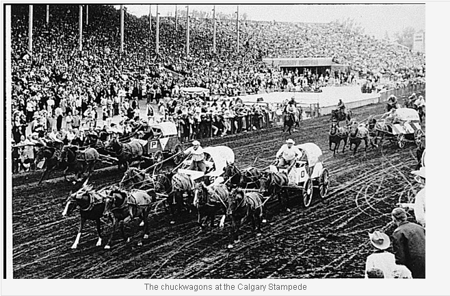 The chuckwagons at the Calgary Stampede